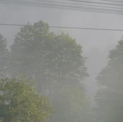 Fog-410