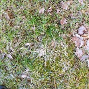 Grass 1-450